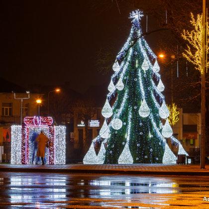 Kalėdų eglės